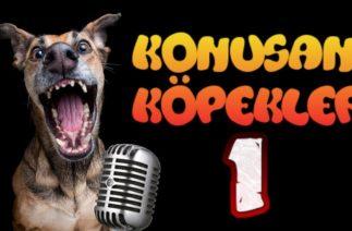 Konuşan Köpekler 1 – En Komik Köpek Videoları
