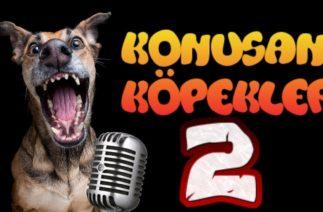 Konuşan Köpekler 2 – En Komik Köpek Videoları