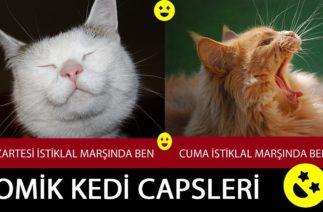 Komik Kedi Capsleri | Komik Video | Öğrenci Videoları