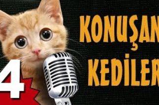 Konuşan Kediler 4 – En Komik Kedi Videoları