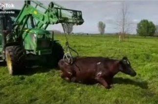 TikTok Etkileyici Traktör Videoları #43