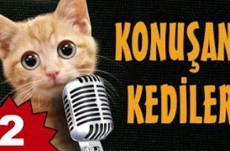 Konuşan Kediler 2 – En Komik Kedi Videoları