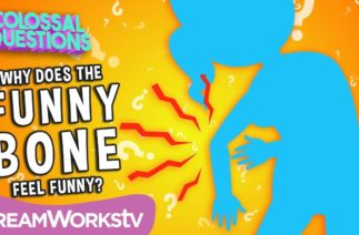 What's So Funny About The Funny Bone? | COLOSSAL QUESTIONS