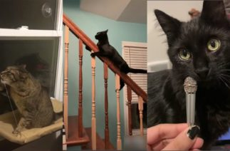 Cats being … CATS 😹~ Tiktok Compilation #3