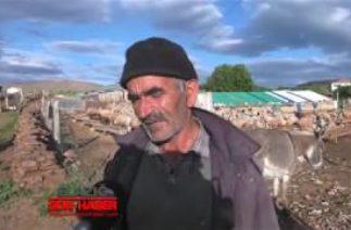 Trafik Kazasında 30 Koyunu Telef Olan Amca Yetkililere Seslendi
