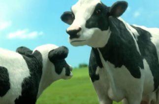 #İneklerin #Komik #Dansı (çocuklar için) ( #Funny #Cow Dans)