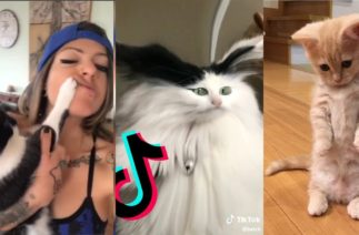 Cats being … CATS 😹~ Tiktok Compilation #4