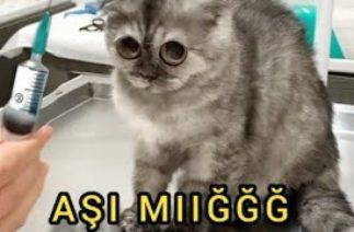 Veterinerdeki kedilerin komik halleri, kedi diyalogları #FunnyVideo #FunnyCats