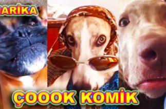 O BİR YARAMAZ KOMİK KÖPEKLER ŞARKISI (Komik Çocuk Şarkısı Köpek Videoları)