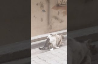 Sevimli Kediler mart ayı gelince komik mutlu son