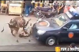 funny bkra eid | funny Qurbani k janwar | uncontrol cow | eid ul azha 2020