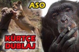 Kürtçe Dublaj Aso ve Paylaşımları Maymun Aslan Komik 2020