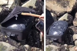 Teenagers on TikTok find suitcase with body parts