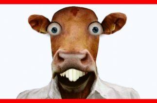 Hanzo – Birbirinden komik absürt hikayeler.Mr Komik adam animasyon.eğlenceli parodi.konuşan inek
