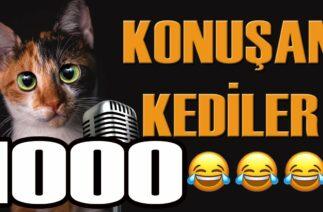 Konuşan Kediler 1000 – En Komik Kedi Videoları