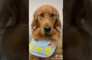 Viral TikTok-  Prank  – Cute Dog cooks noodles for dad- Douyin(抖音)