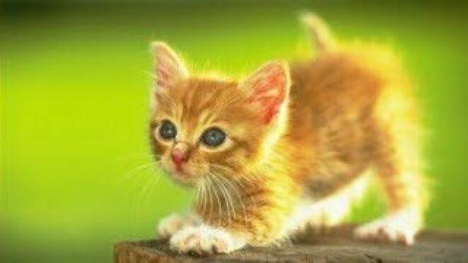 Sevimli Kediler&Tepkiler 😹 Komik Şeyler Yapan Hayvanlar 😹 funny animals