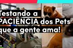 TESTANDO A PACIÊNCIA dos Pets que a gente ama ❤️ | TikTok Brasil