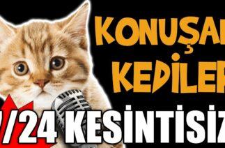 7/24 Kesintisiz Konuşan Kediler – En Komik Kedi Videoları Canlı Yayın