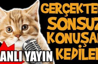 Gerçekten Sonsuz Konuşan Kediler Canlı Yayını – En Komik Kedi Videoları Canlı Yayın