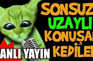 Gerçekten Sonsuz Uzaylı Konuşan Kediler Canlı Yayını – En Komik Kedi Videoları Canlı Yayın