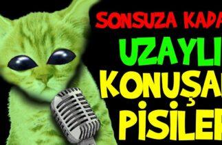 Gerçekten Sonsuz Uzaylı Konuşan Pisiler Canlı Yayını – En Komik Kedi Videoları Canlı Yayın