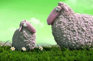 Komik Kuzular Yeni Nesil Kuzular Koyun Mee Lamb Animal