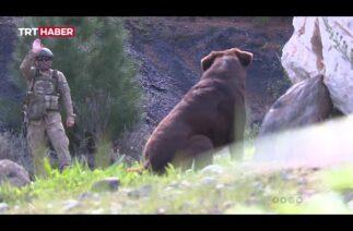 TSK, METİ timi ile Azerbaycan ordusunu eğitiyor