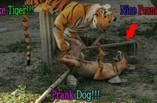 Fake Tiger Prank Dog Run So Funny Action Pranks 2021