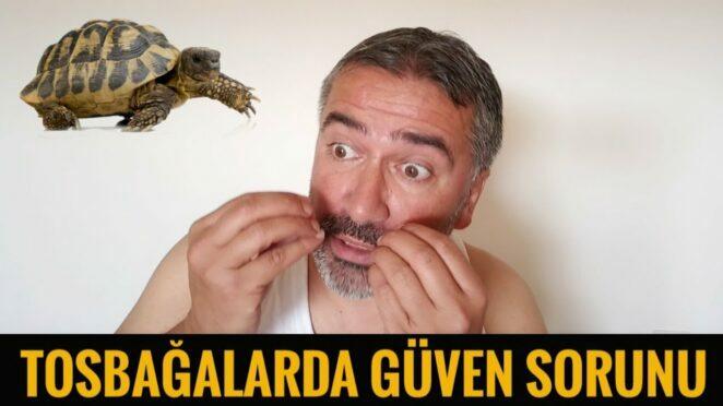 Tosbağalarda Güven Sorunu / AYHAN RÜZGAR / KOMİK VİDEOLAR