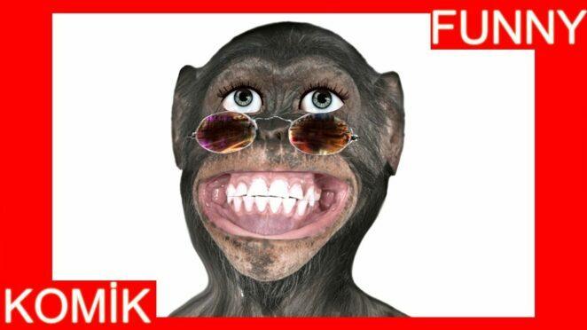 Maymun ceviz adam şarkısını söylüyor komik maymun komik patates adam maymun videoları komik şarkılar
